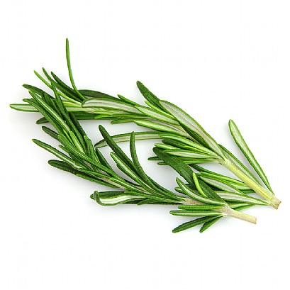 Rosemary 3